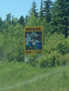6 moose on the loose